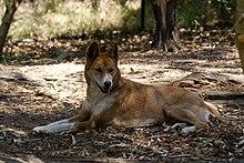 Australia Dog Leads Retracable