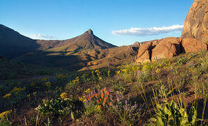 Trout Creek Mountains - Image: Disaster Peak and wildflowers