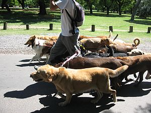 A dog walking service