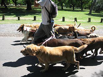 Dog walking - A dog walking service