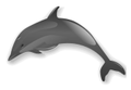 Dolphin clip.png