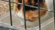 File:Drinking cat (Madrid, Spain) 02.webm