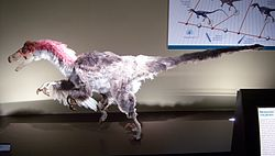 Dromaeosaurus-recreation.jpg