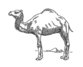 Dromedary (PSF).png