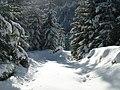 Drum forestier iarna - panoramio.jpg