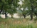 Drzewa przy drodze - panoramio.jpg