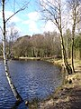 East Bank of Kingsley Pond - geograph.org.uk - 353246.jpg