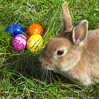 Easter Bunny - Image: Easterbunny 1