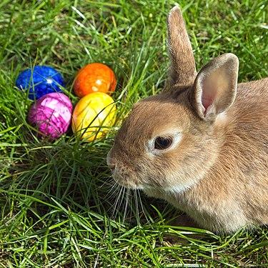 Easterbunny 1.jpg