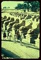 Egypt. Karnak. Row of Sphinxes in front of 1st pylon LOC matpc.23079.jpg