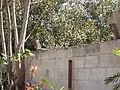 El Tolok ( Iguana en Cottolengo ) - panoramio.jpg