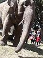 Elephant20171111 122149.jpg