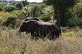 Elephants, Tarangire National Park (13) (28084496704).jpg