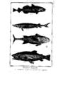 Encyclopedie volume 5-108.png