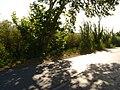 Entre árboles - panoramio.jpg