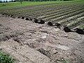 Erosion Rinnen005.jpg