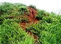 Erramatti Dibbalu (Red Sand Hills) in Visakhapatnam 05.jpg