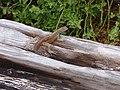 Espanola - Hood - Galapagos Islands - Ecuador (4871482140).jpg