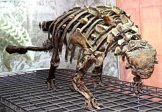 Ankylosauria - Mounted skeleton of Scolosaurus thronus, Senckenberg Museum