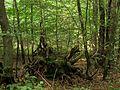 Fürther Stadtwald.jpg