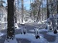 FL Swamp covered in Snow (5303526263).jpg