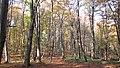Faget forest (3042575795).jpg