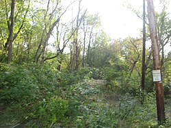 Fairfield Township Works I in woods.jpg
