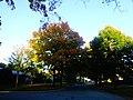 Fall in Madison - panoramio (9).jpg