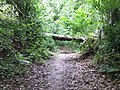 Fallen beech in Merryhill Wood - geograph.org.uk - 471008.jpg