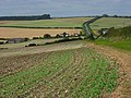 Farmland, Forston - geograph.org.uk - 545471.jpg