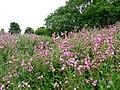 Farmland, near West Keal - geograph.org.uk - 1742665.jpg
