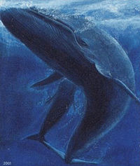 Faroe stamp 402 blue whale (Balaenoptera musculus) crop