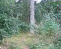 Fawn Wood. - geograph.org.uk - 46556.jpg
