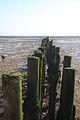 Fenceline at East Mersea - geograph.org.uk - 1004070.jpg
