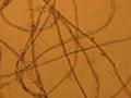 Fibrillation of lyocell fibre.png
