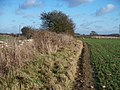 Field edge path - geograph.org.uk - 1630273.jpg