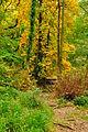 Fingle Woods (6232).jpg