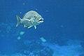 Fish (35653286022).jpg