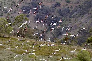 Flock of galah and sparrows