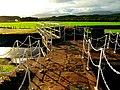 Floodgates And Sheep - panoramio.jpg