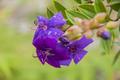 Flores da região de vila de igatu 5.png