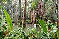 Floresta da Tijuca 29.jpg