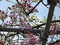 Flower-center134547.jpg
