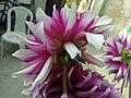 Flower.01.jpg