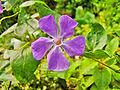 Flower Rex 21.jpg