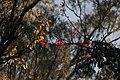 Flowers (43980342).jpeg
