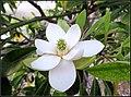 Flowers (7014747335).jpg