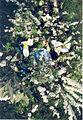 Flowersongrave.jpg