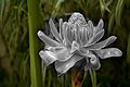 Focus (FLORA-PLANTS) IV (660907617).jpg