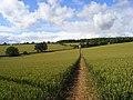Footpath through wheat, Brightwalton - geograph.org.uk - 890782.jpg